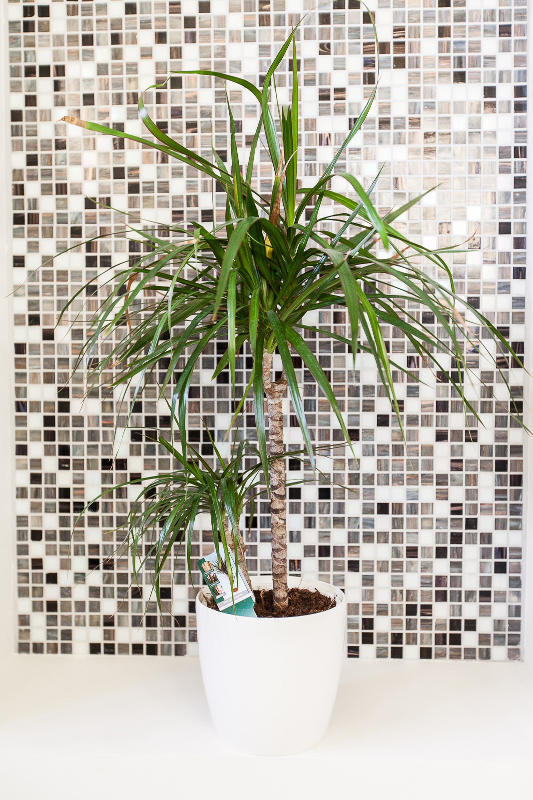 Hotel Marotte amiens chambre superieur plante